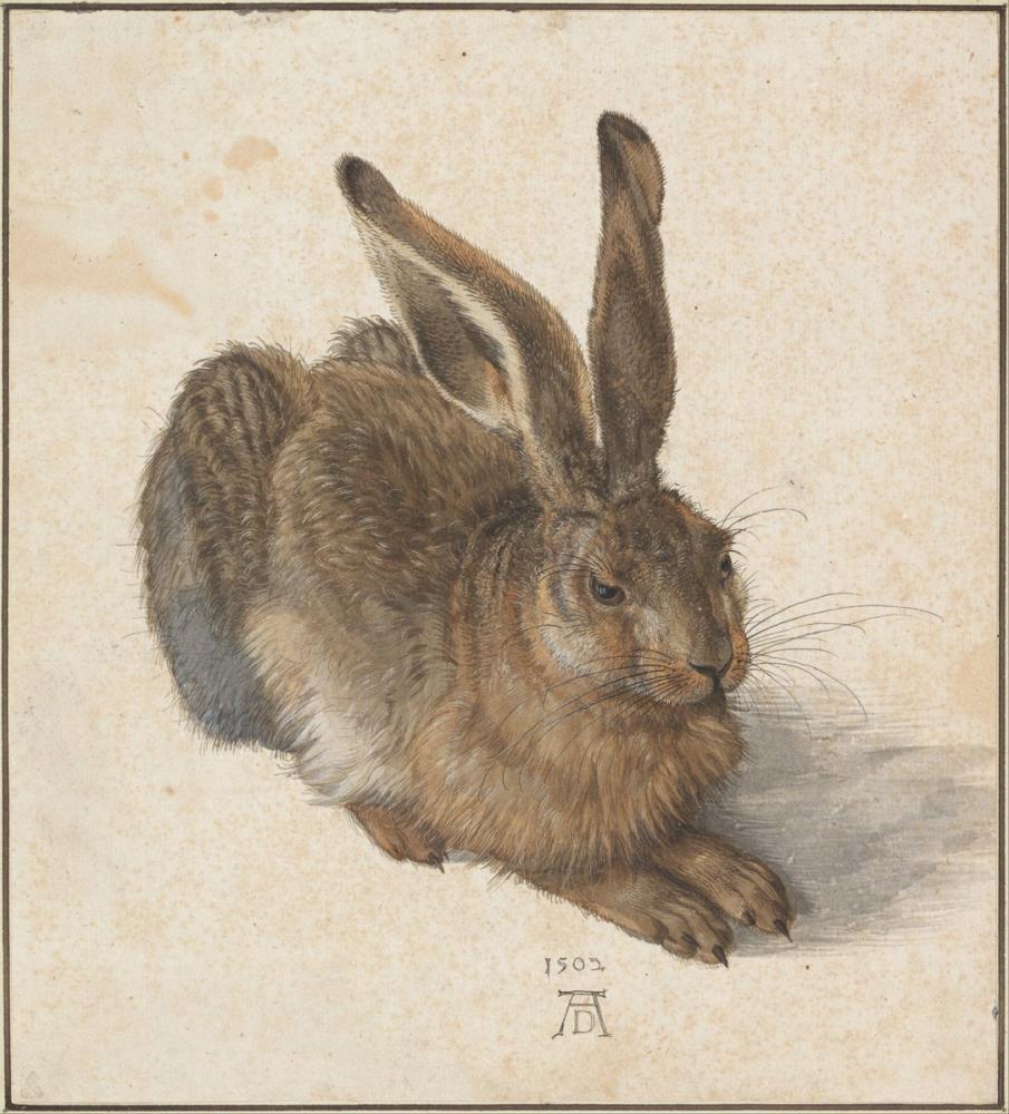 Albrecht Dürer Hare, Canvas, Albrecht Dürer, kanvas tablo, canvas print sales
