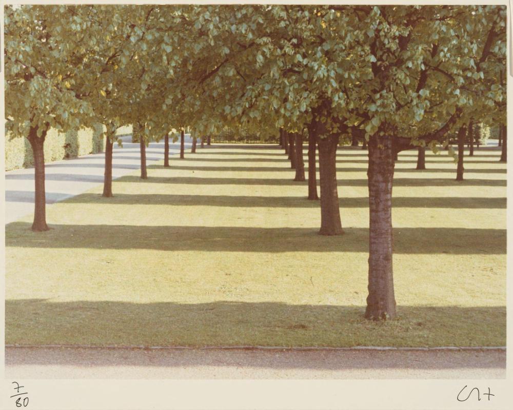 David Hockney, Çamlar, Fire Island, Kanvas Tablo, David Hockney, kanvas tablo, canvas print sales