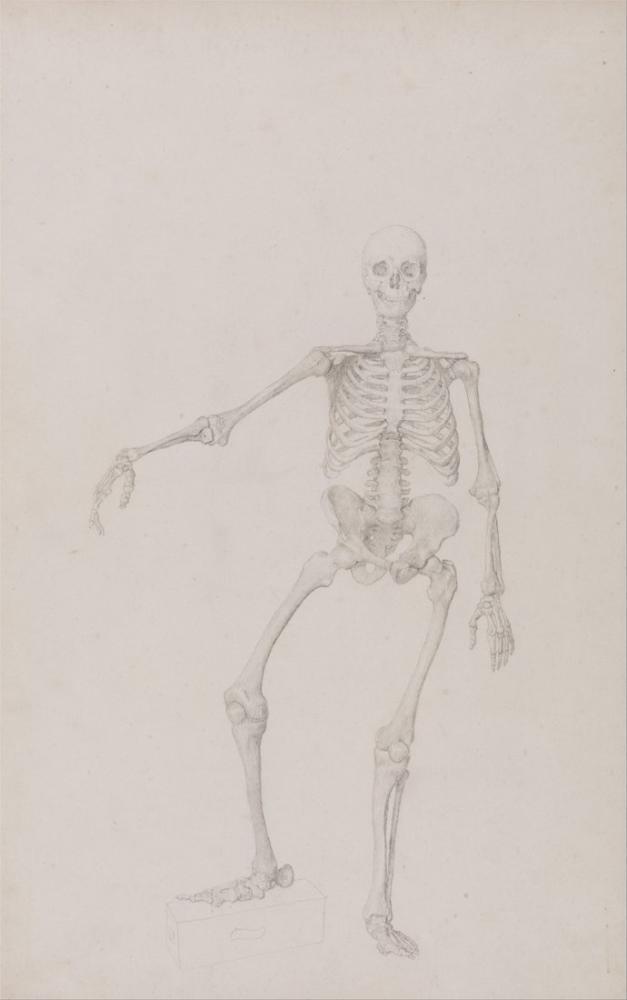 George Stubbs, Human Body XI, Figure, George Stubbs, kanvas tablo, canvas print sales