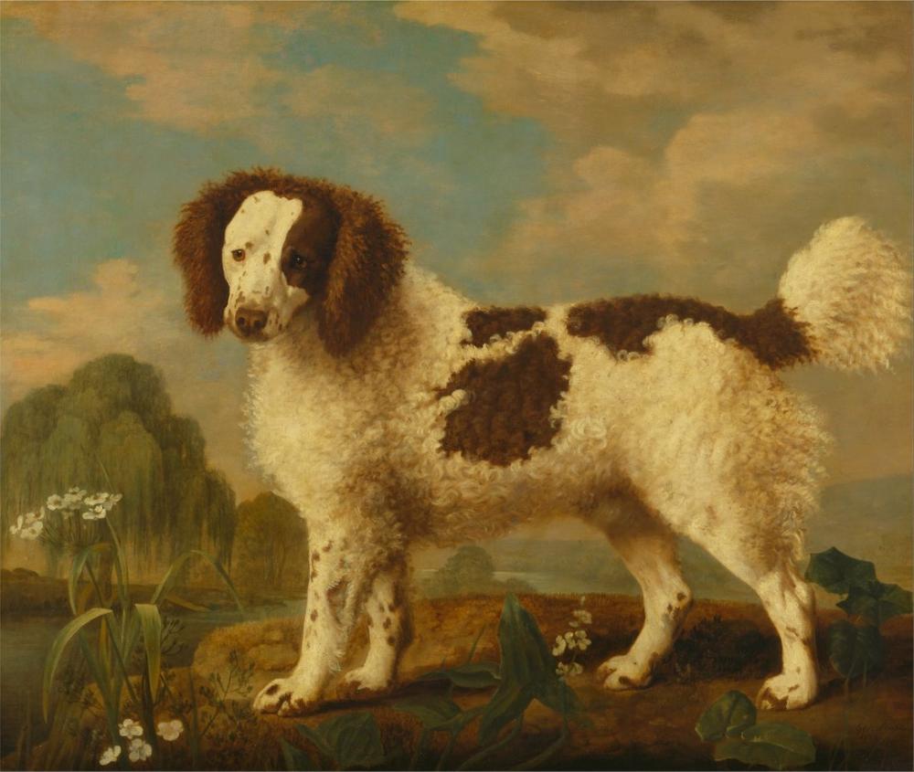 George Stubbs, Brown and White Norfolk or Water Spaniel, Canvas, George Stubbs, kanvas tablo, canvas print sales