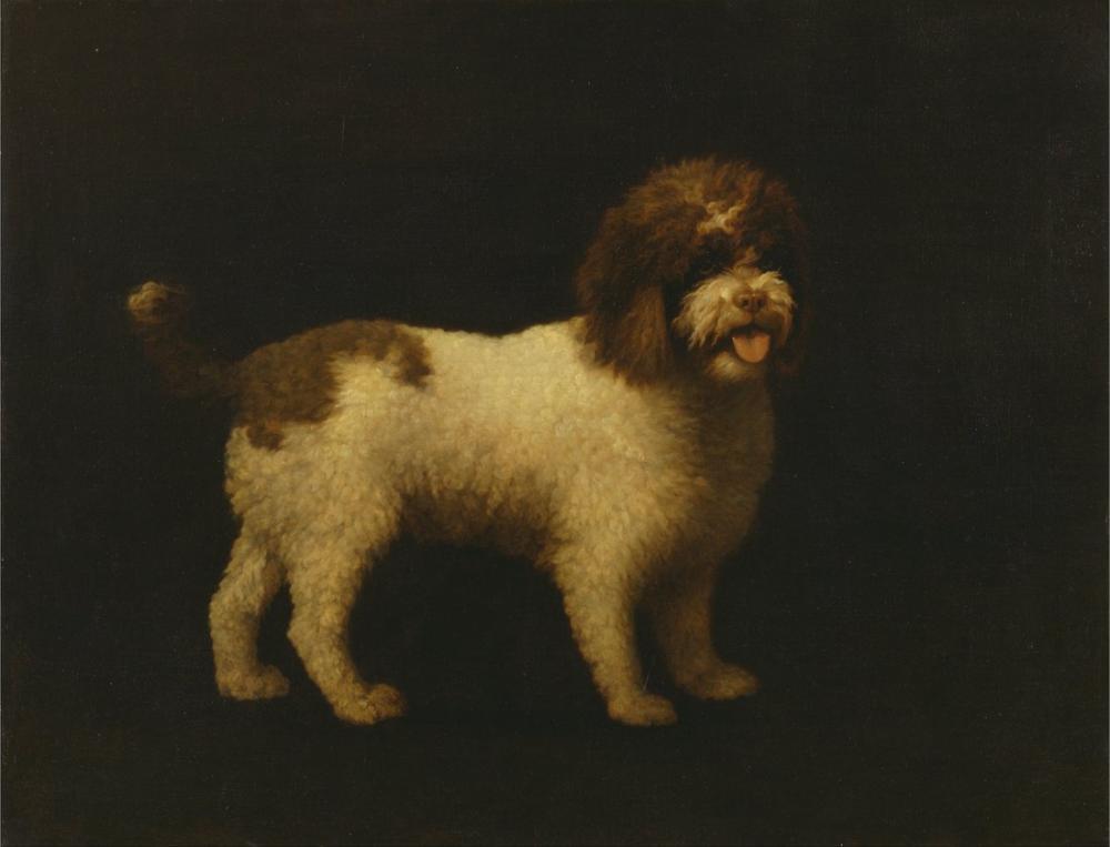 George Stubbs, Water Spaniel, Canvas, George Stubbs, kanvas tablo, canvas print sales