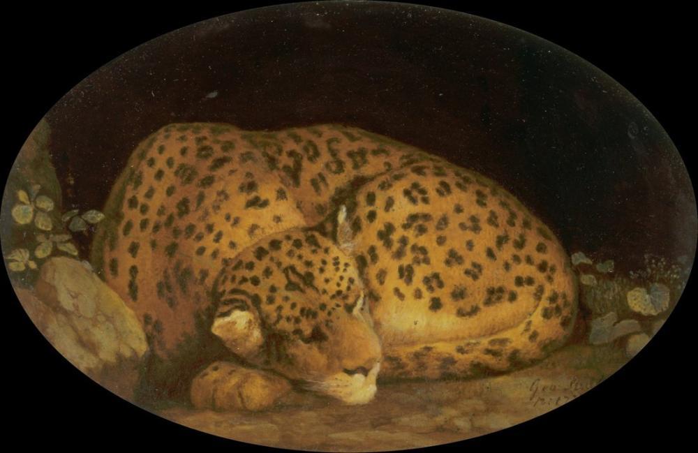 George Stubbs, Sleeping Leopard, Canvas, George Stubbs, kanvas tablo, canvas print sales
