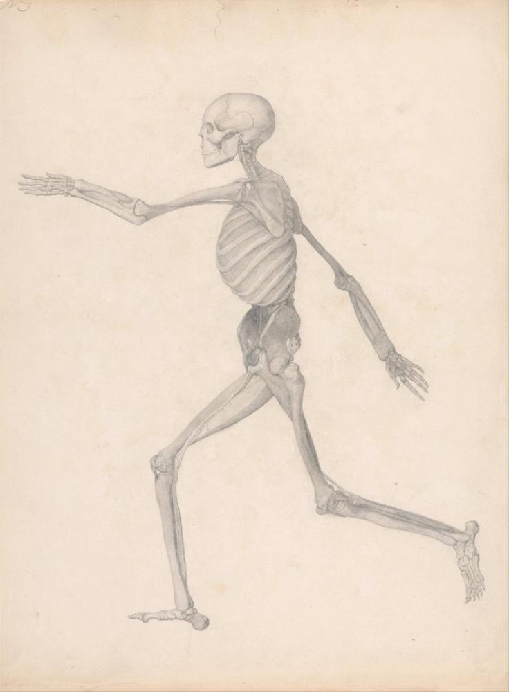 George Stubbs, Human Body VIII, Figure, George Stubbs, kanvas tablo, canvas print sales