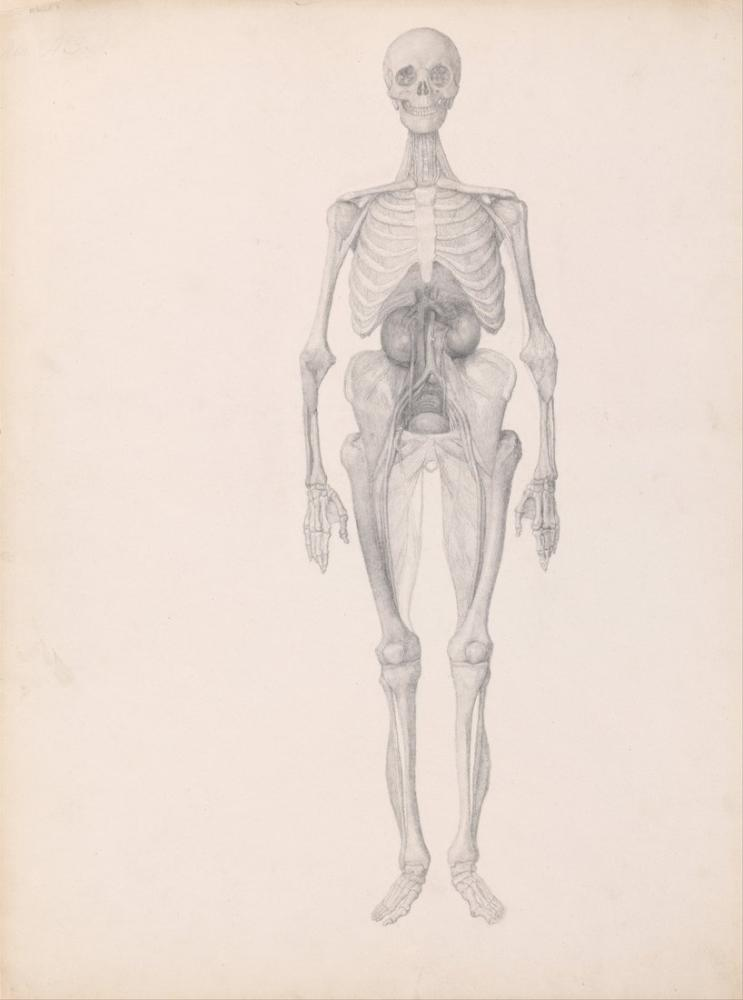 George Stubbs, İnsan Vücudu XIII, Figür, George Stubbs, kanvas tablo, canvas print sales