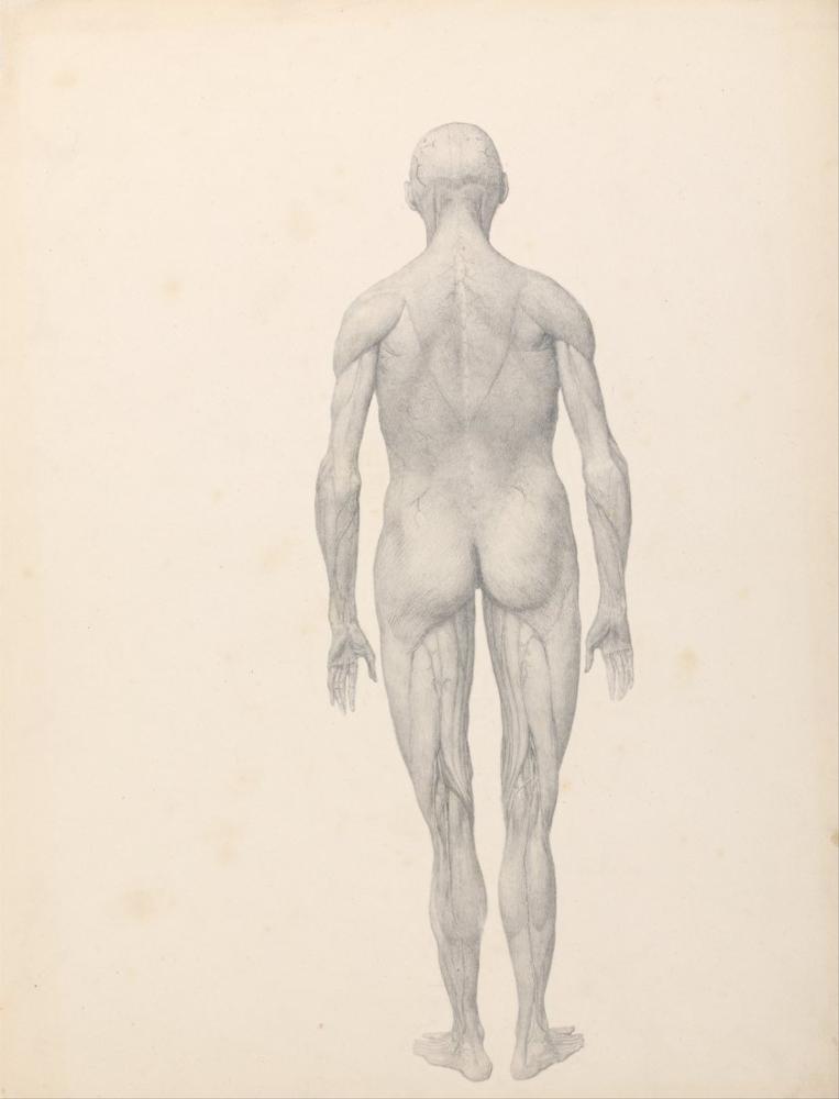George Stubbs, Human Body IV, Figure, George Stubbs, kanvas tablo, canvas print sales