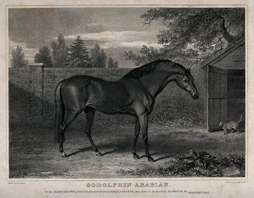 George Stubbs, A Horse in A Yard Wellcome, Canvas, George Stubbs, kanvas tablo, canvas print sales