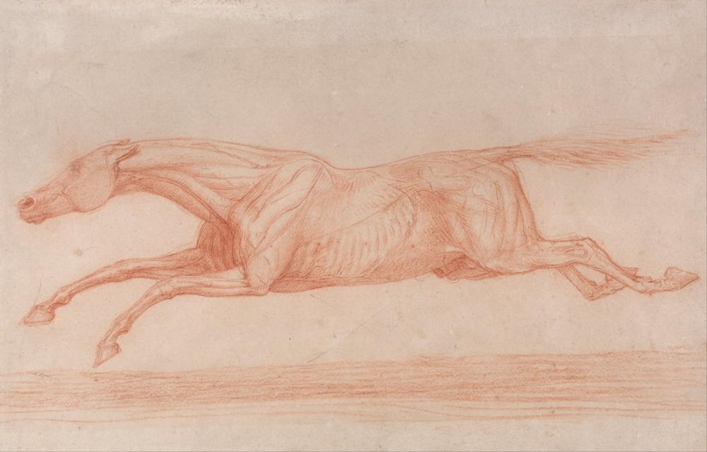 George Stubbs, Study of a Racehorse in Action Galloping to Left, a Semi Anatomical Study, with Skin Flayed, Figure, George Stubbs, kanvas tablo, canvas print sales
