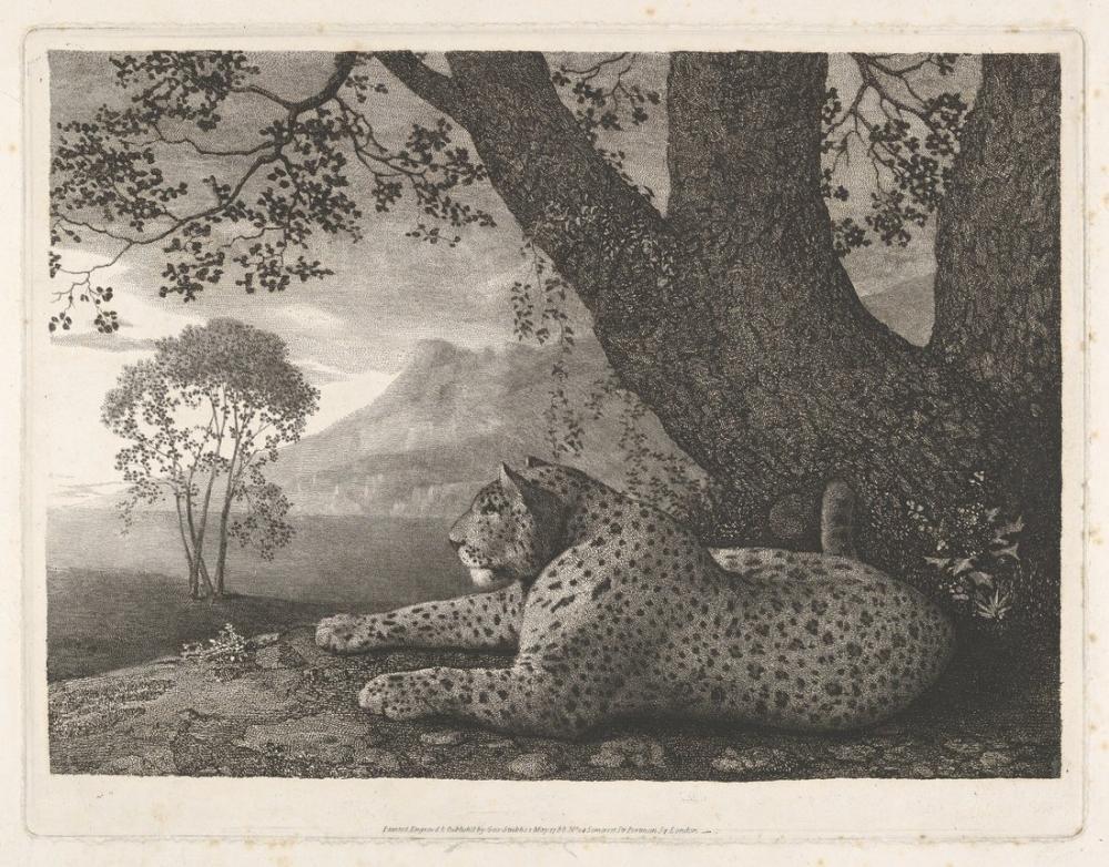 George Stubbs, Bir Ağacın Kenarında Uzanan Leopar, Kanvas Tablo, George Stubbs, kanvas tablo, canvas print sales