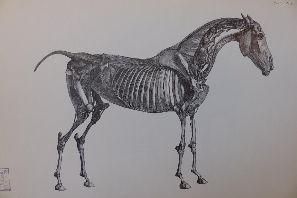 George Stubbs, At Anatomisi Profili, Figür, George Stubbs, kanvas tablo, canvas print sales