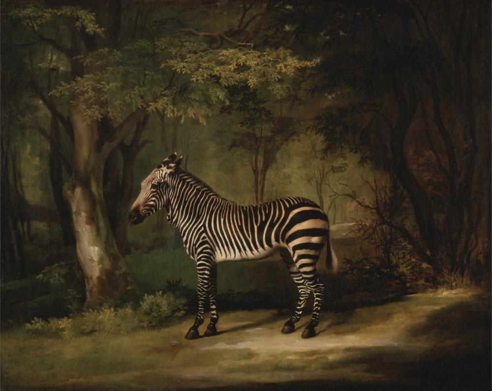 George Stubbs, Zebra, Canvas, George Stubbs, kanvas tablo, canvas print sales