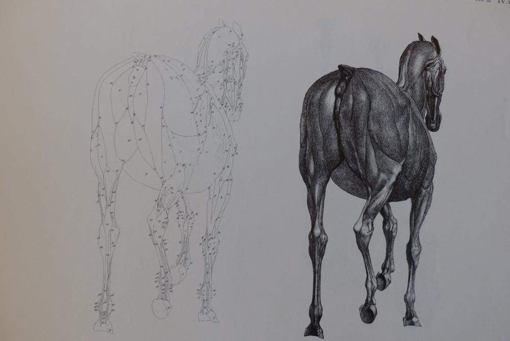 George Stubbs, At Sırtının Anatomisi, Kanvas Tablo, George Stubbs, kanvas tablo, canvas print sales