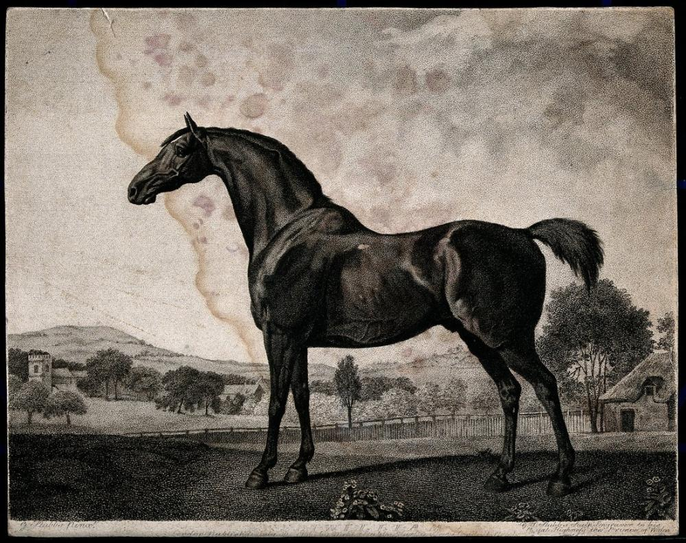 George Stubbs, Bir At Kırsal Karşılama, Kanvas Tablo, George Stubbs, kanvas tablo, canvas print sales