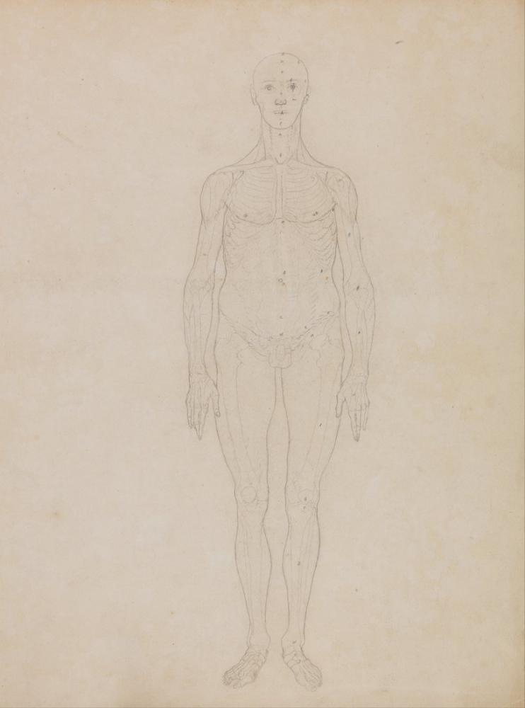 George Stubbs, Human Body IX, Figure, George Stubbs, kanvas tablo, canvas print sales