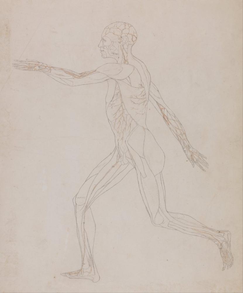 George Stubbs, Human Body VI, Figure, George Stubbs, kanvas tablo, canvas print sales