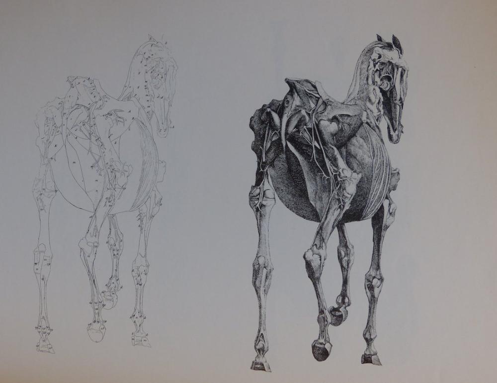 George Stubbs, Atın Arka Anatomisi, Figür, George Stubbs, kanvas tablo, canvas print sales