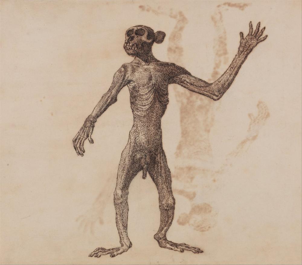 George Stubbs, Beşeri Vücudu XVIII, Figür, George Stubbs, kanvas tablo, canvas print sales