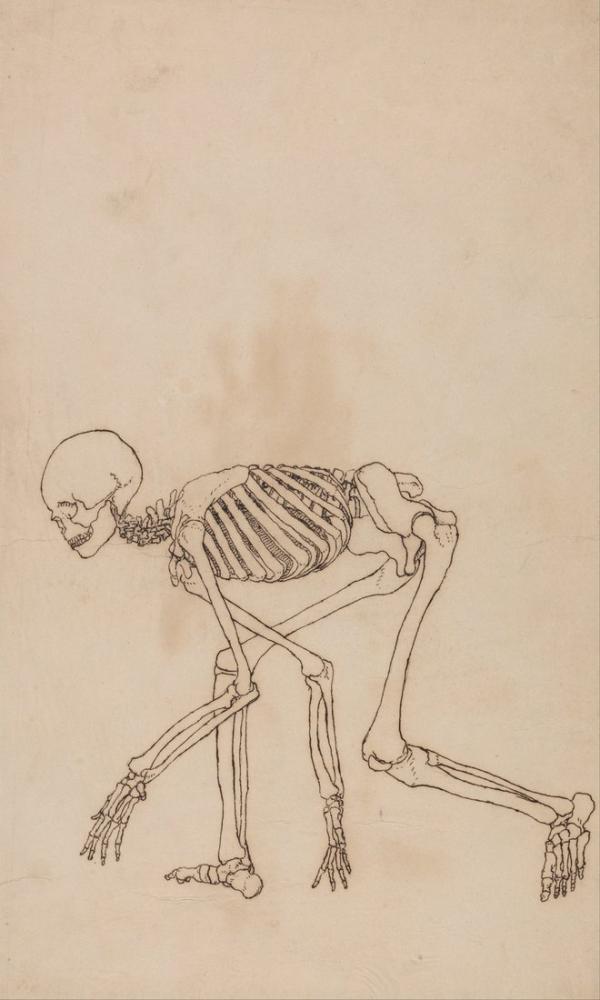 George Stubbs, Human Body X, Figure, George Stubbs, kanvas tablo, canvas print sales