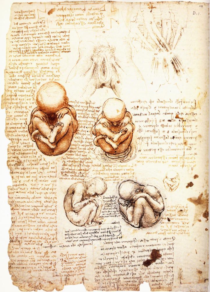Studies of The Fetus in The Womb, Leonardo da Vinci, Canvas, Leonardo Da Vinci, kanvas tablo, canvas print sales