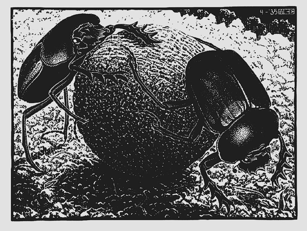 Maurits Cornelis Escher Bok Böcekleri, Kanvas Tablo, Maurits Cornelis Escher, kanvas tablo, canvas print sales
