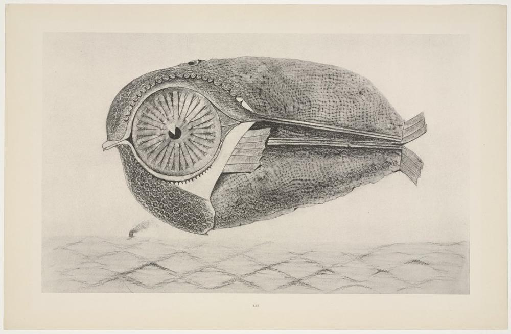 Max Ernst Kaçak, Figür, Max Ernst, kanvas tablo, canvas print sales