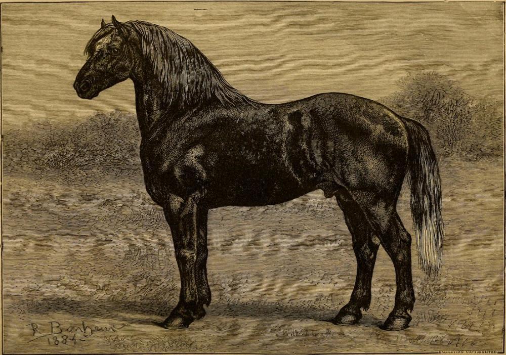 Rosa Bonheur, Percheron Atları Adası Ev Stok Çiftlik Grosse Ile Wayne Co, Kanvas Tablo, Rosa Bonheur, kanvas tablo, canvas print sales