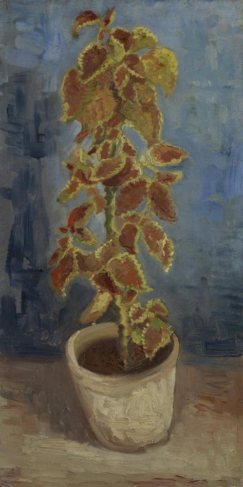 Vincent van Gogh, Coleus in Flowerpot, Canvas, Vincent Van Gogh, kanvas tablo, canvas print sales