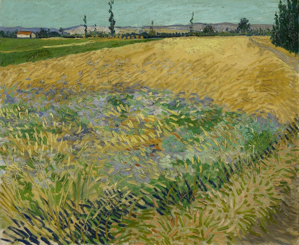 Vincent van Gogh, Cornfield, Canvas, Vincent Van Gogh, kanvas tablo, canvas print sales