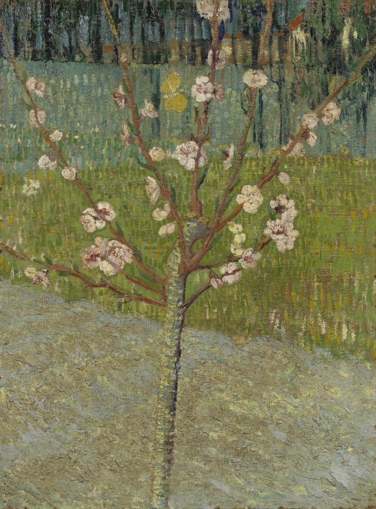 Vincent Van Gogh Almond Tree in Blossom, Canvas, Vincent Van Gogh