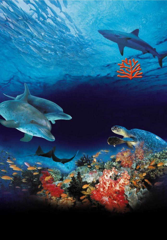 Ocean Wonderland Documentary Poster 2, Animal, Poster Satış, all posters, kanvas tablo, canvas print sales