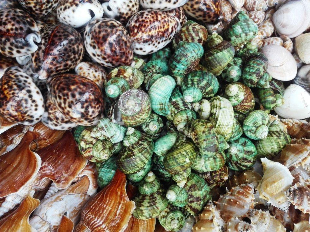 Colorful Sea Snail Shells Poster, Animal, Poster Satış, all posters, kanvas tablo, canvas print sales