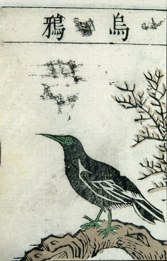 Ming Herbal Painting Crow Poster, Animal, Poster Satış, all posters, kanvas tablo, canvas print sales