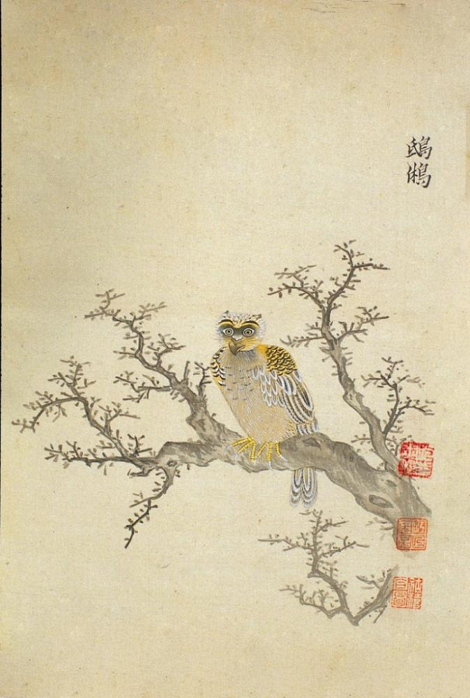Ming Herbal Painting Owl Poster, Animal, Poster Satış, all posters, kanvas tablo, canvas print sales
