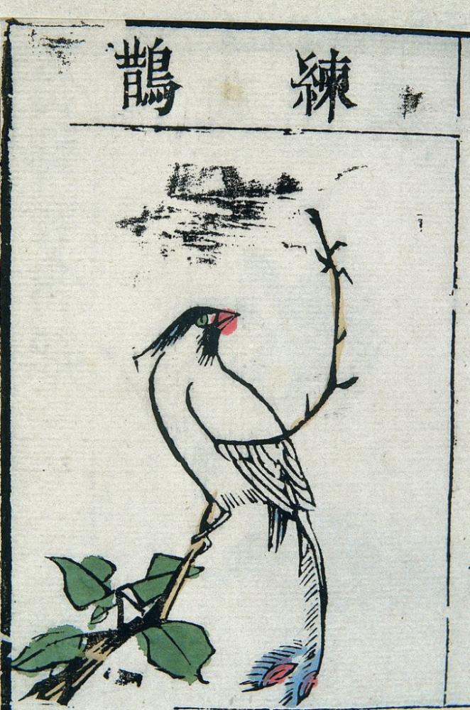 Ming Herbal Painting Paradise Flycatcher Poster, Animal, Poster Satış, all posters, kanvas tablo, canvas print sales
