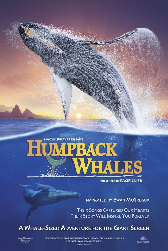 Humpback Whales Movie Poster, Movie Poster, Poster Satış, all posters, kanvas tablo, canvas print sales