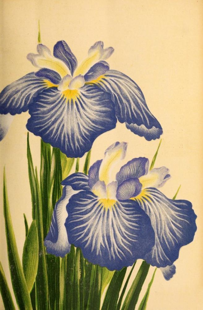 Lily Poster, Plant, Poster Satış, all posters, kanvas tablo, canvas print sales