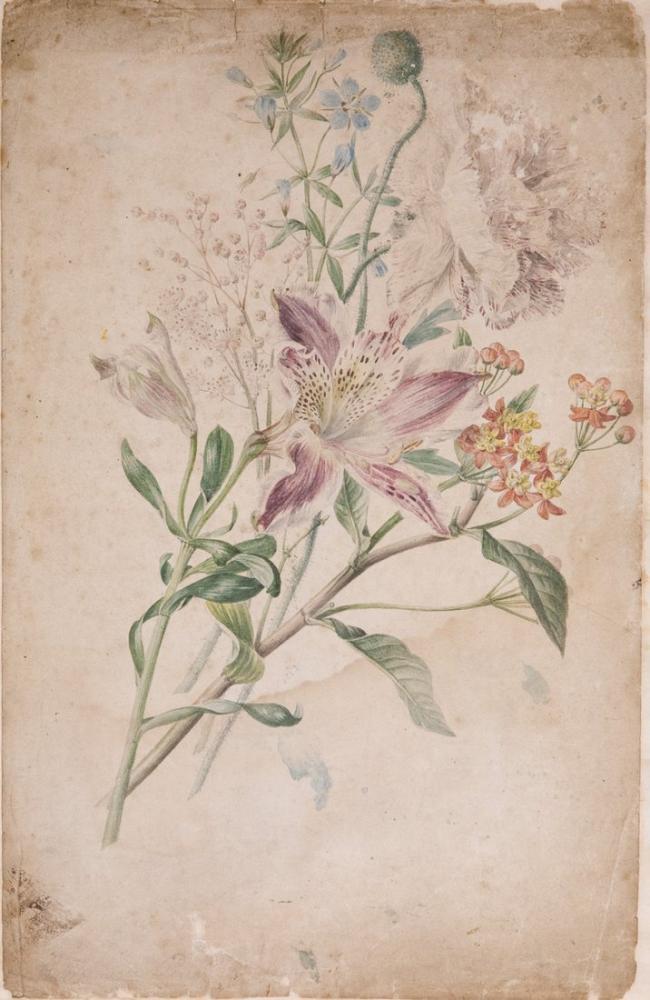 Alstroemeria and Gypsophila Poster, Plant, Poster Satış, all posters