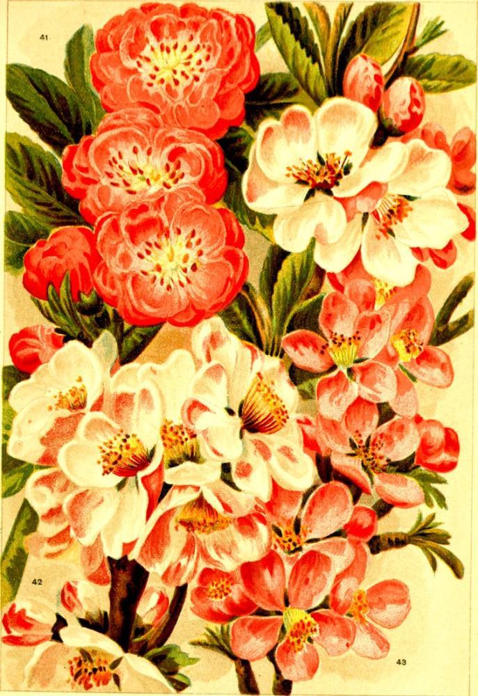 Kırmızı ve Beyaz Çiçekler Poster 1 Posteri, Bitki, Poster Satış, all posters, kanvas tablo, canvas print sales