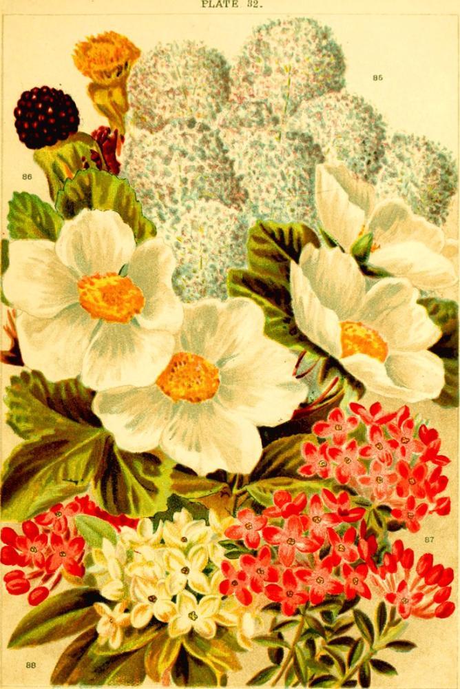 Kırmızı ve Beyaz Çiçekler Poster 2 Posteri, Bitki, Poster Satış, all posters, kanvas tablo, canvas print sales