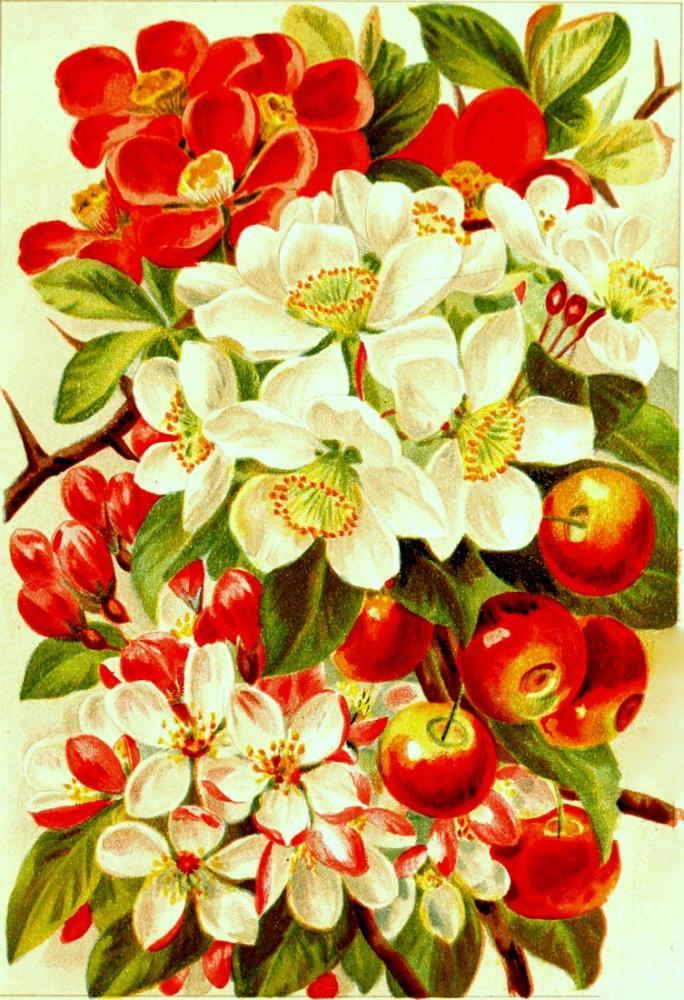 Kırmızı ve Beyaz Çiçekler Poster 4 Posteri, Bitki, Poster Satış, all posters, kanvas tablo, canvas print sales