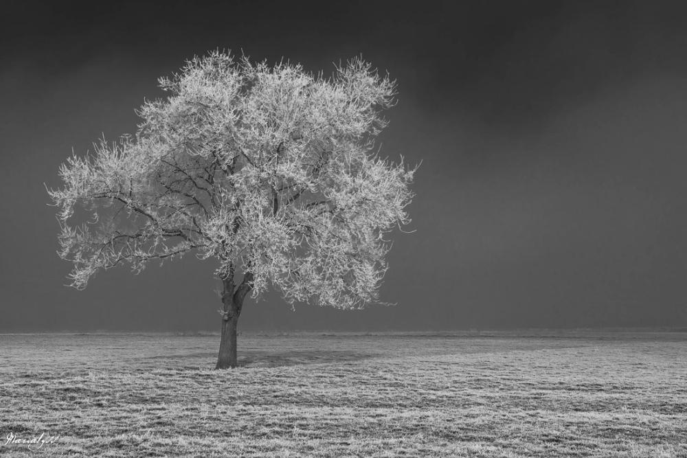A Tree in Winter Poster, Plant, Poster Satış, all posters, kanvas tablo, canvas print sales
