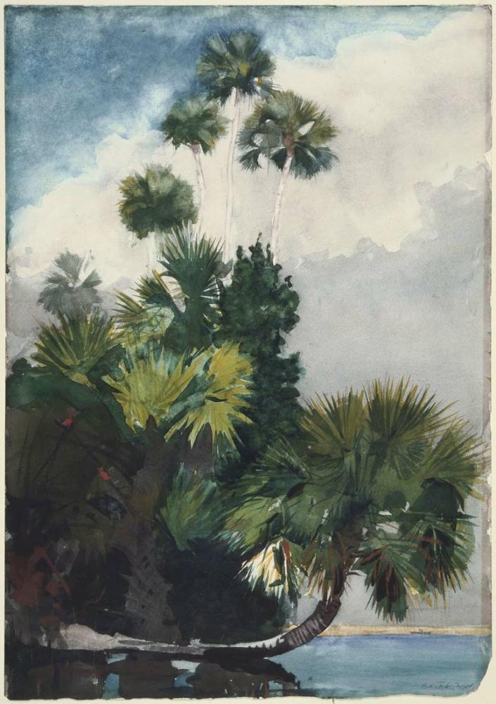 Palm Tree Poster 4 Poster, Plant, Poster Satış, all posters, kanvas tablo, canvas print sales