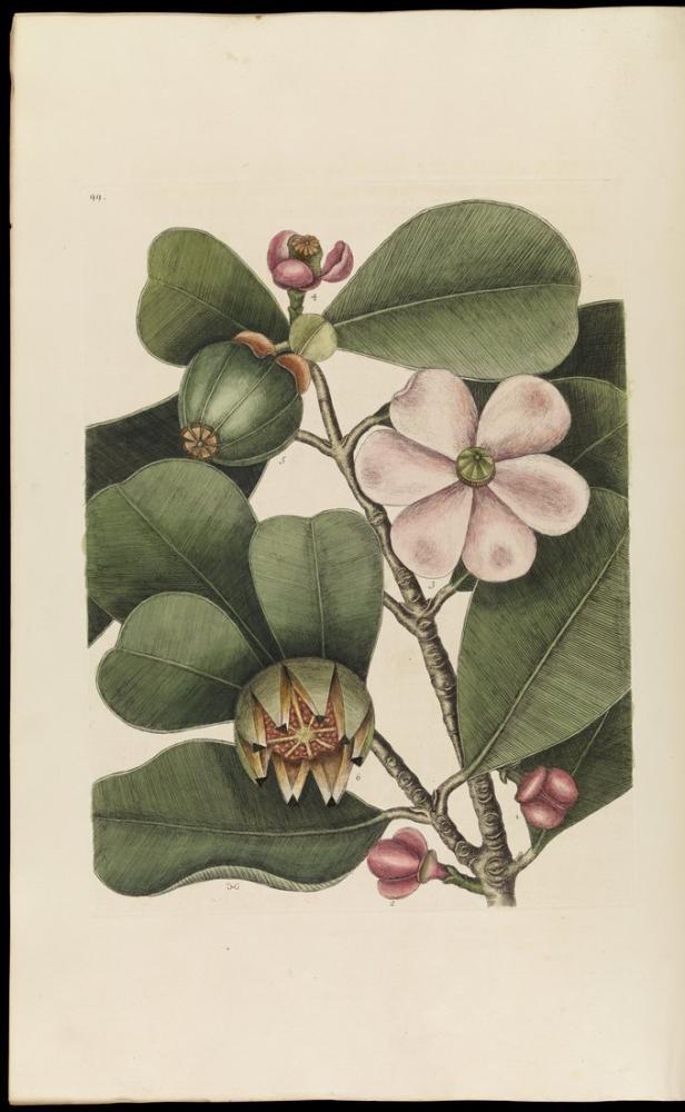Balsam Tree Poster, Plant, Poster Satış, all posters, kanvas tablo, canvas print sales
