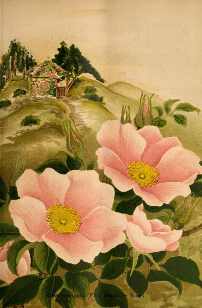 Wild Rose Poster, Plant, Poster Satış, all posters, kanvas tablo, canvas print sales