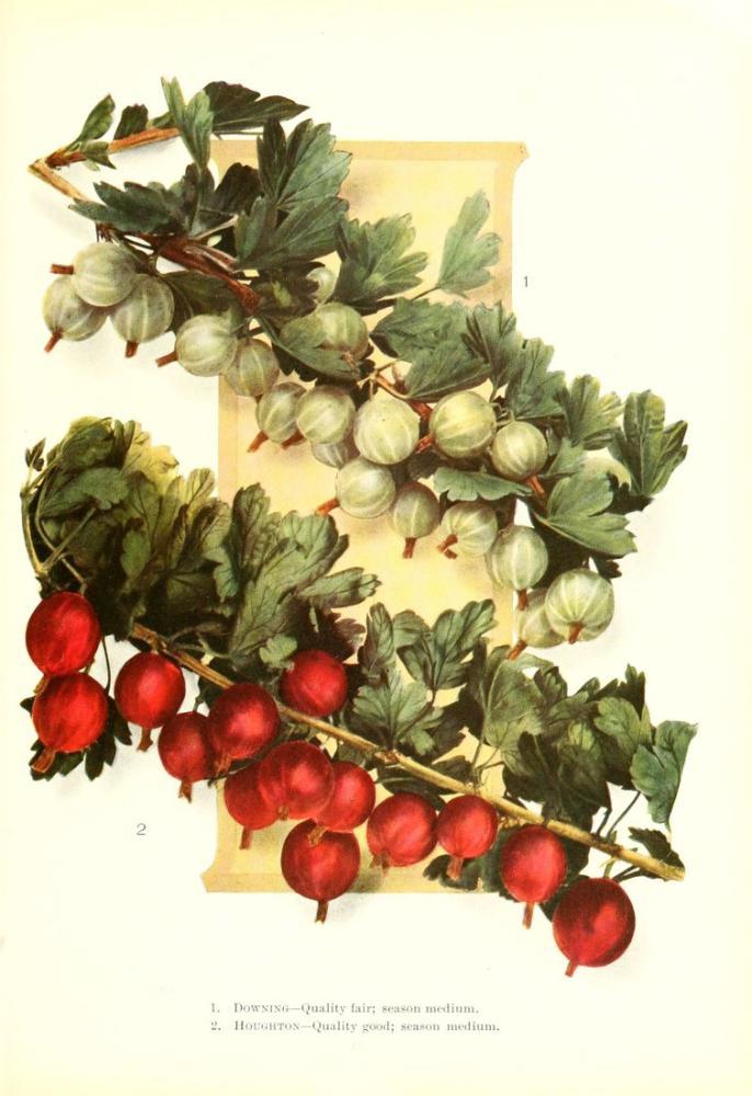 Pomegranate Poster, Plant, Poster Satış, all posters, kanvas tablo, canvas print sales