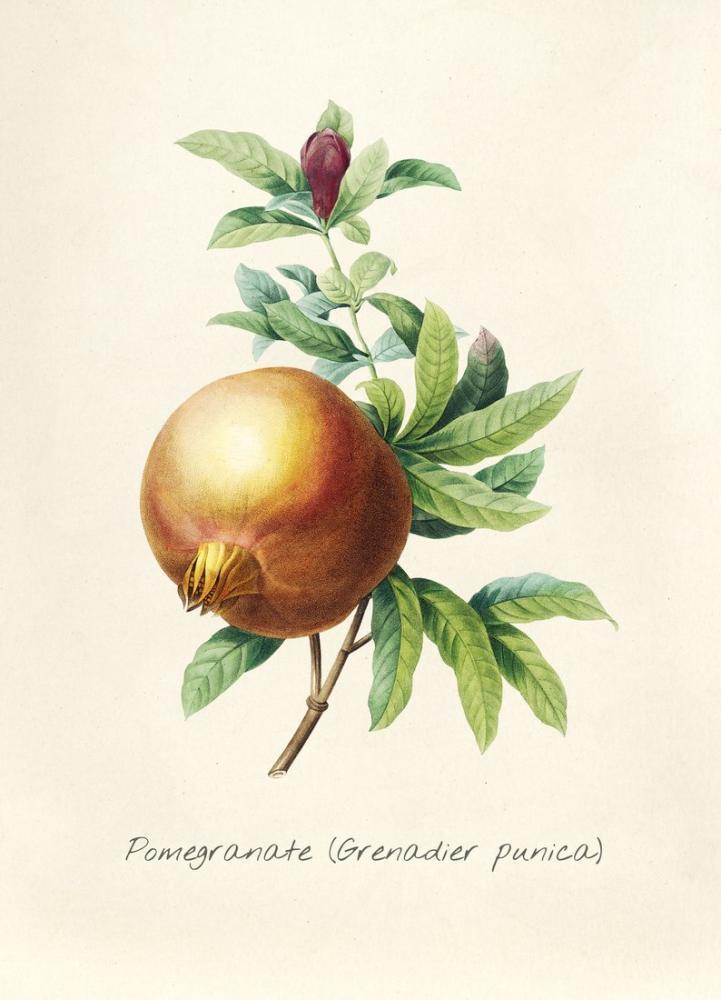 Pomegranate Branch Poster, Plant, Poster Satış, all posters, kanvas tablo, canvas print sales