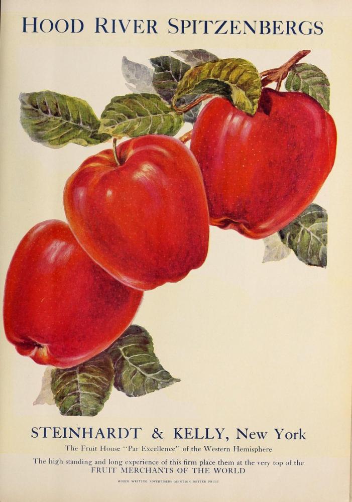 Kırmızı Elmalar Posteri, Bitki, Poster Satış, all posters, kanvas tablo, canvas print sales