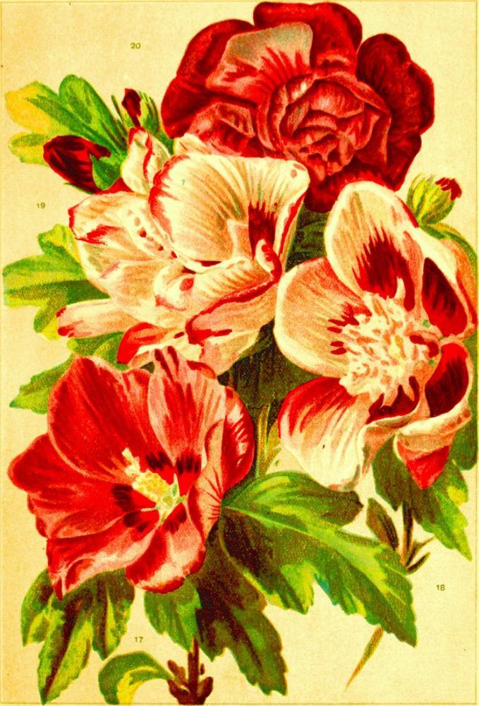 Kırmızı Çiçekler Posteri, Bitki, Poster Satış, all posters, kanvas tablo, canvas print sales