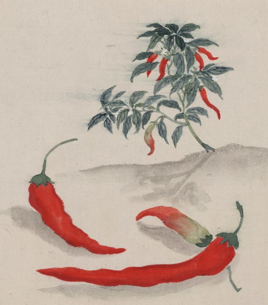 Kırmızı Biber Posteri, Bitki, Poster Satış, all posters, kanvas tablo, canvas print sales