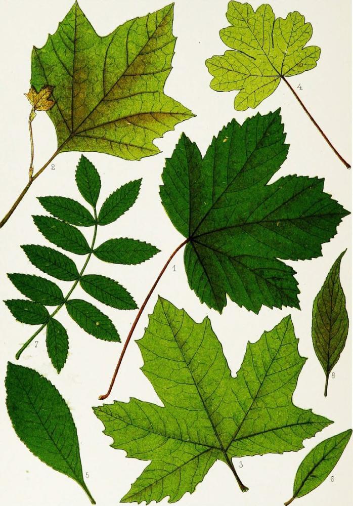 Ağaç Yaprakları Posteri, Bitki, Poster Satış, all posters, kanvas tablo, canvas print sales