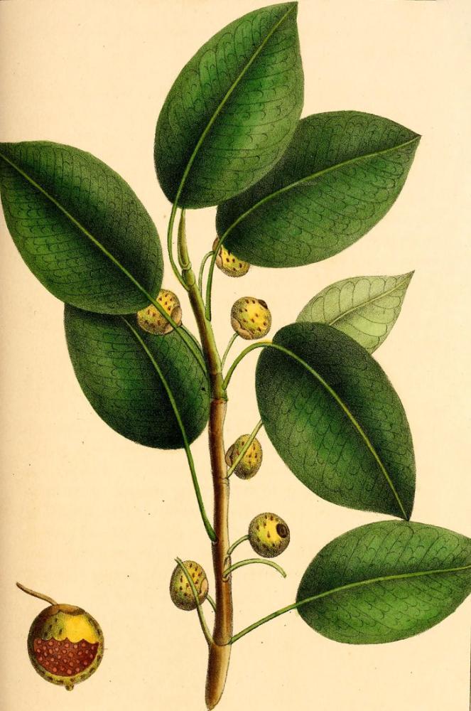 Green Leaf Poster, Plant, Poster Satış, all posters, kanvas tablo, canvas print sales